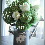 ANTIQUE WATERING CAN…coming home