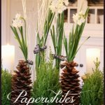 PAPERWHITES IN THE KITCHEN