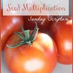 TOO MANY TOMATOES OR THE SPIRITUAL TRUTH OF SEED MULTIPLICATION!