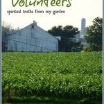 THE PROBLEM WITH VOLUNTEERS~ SUNDAY SCRIPTURE