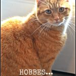 HOBBES, THE CAT AT STONEGABLE