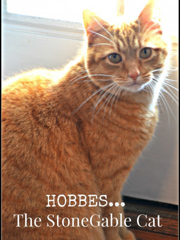 HOBBES-THE STONEGABLE CAT-stonegableblog.com