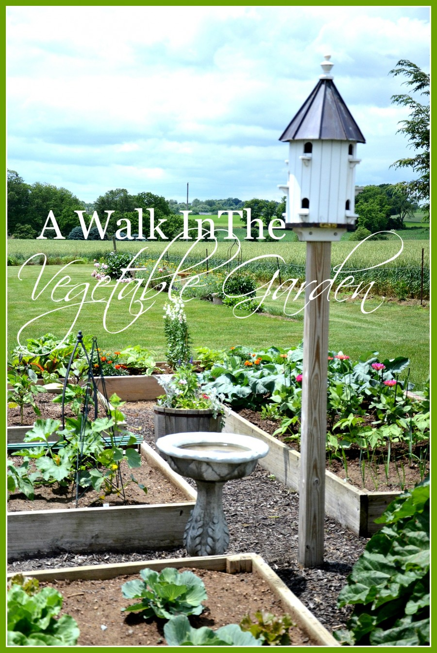 Over The Garden Walk: A WALK IN THE VEGETABLE GARDEN