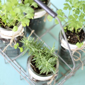 Decorating with Mason Jars and herbs