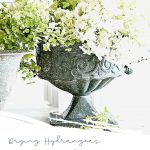 GREEN AND WHITE DRYED HYDRANGEAS IN RUSTIC URNS