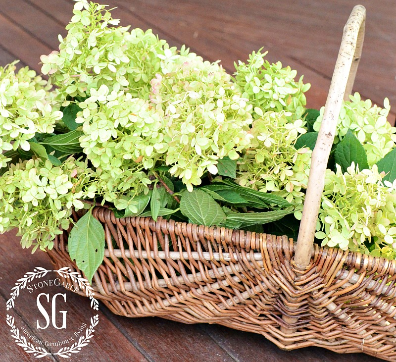 HOW TO DRY HYDRANGEAS- If you have hydrangeas you really should dry them for gorgeous hydrangeas!