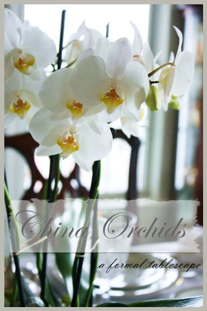 """CHINA ORCHIDS And """"OPEN HOUSE"""""""