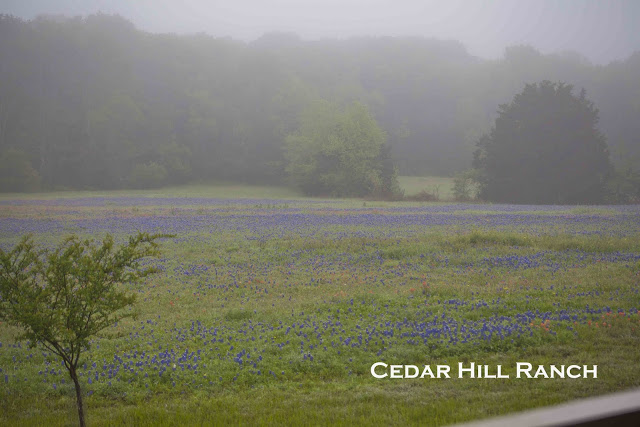 CEDAR HILL RANCH~ BY INVITATION ONLY