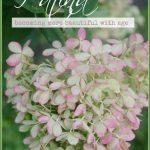 BLOG+Hydrangea+Patina+Title+Page+stonegableblog.com+-