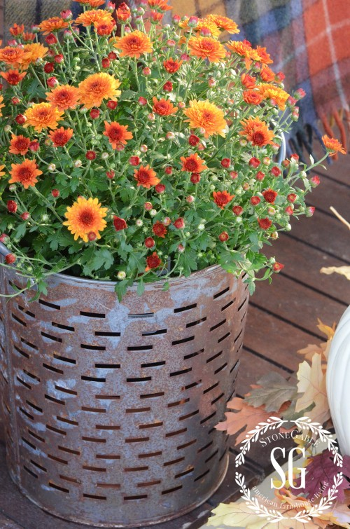 FALL BACK PORCH- galvanized bucket-mums-stonegableblog.com