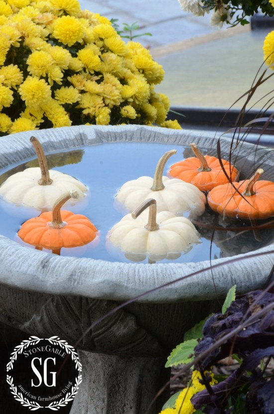 FALL AT THE POTTING BENCH-mini pumpkins swimming in birdbath-stonegableblog.com