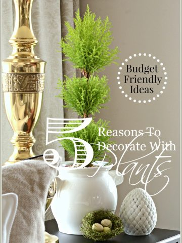 5 REASONS TO DECORATE WITH PLANTS-budget friendly ideas and tips-stonegableblog.com