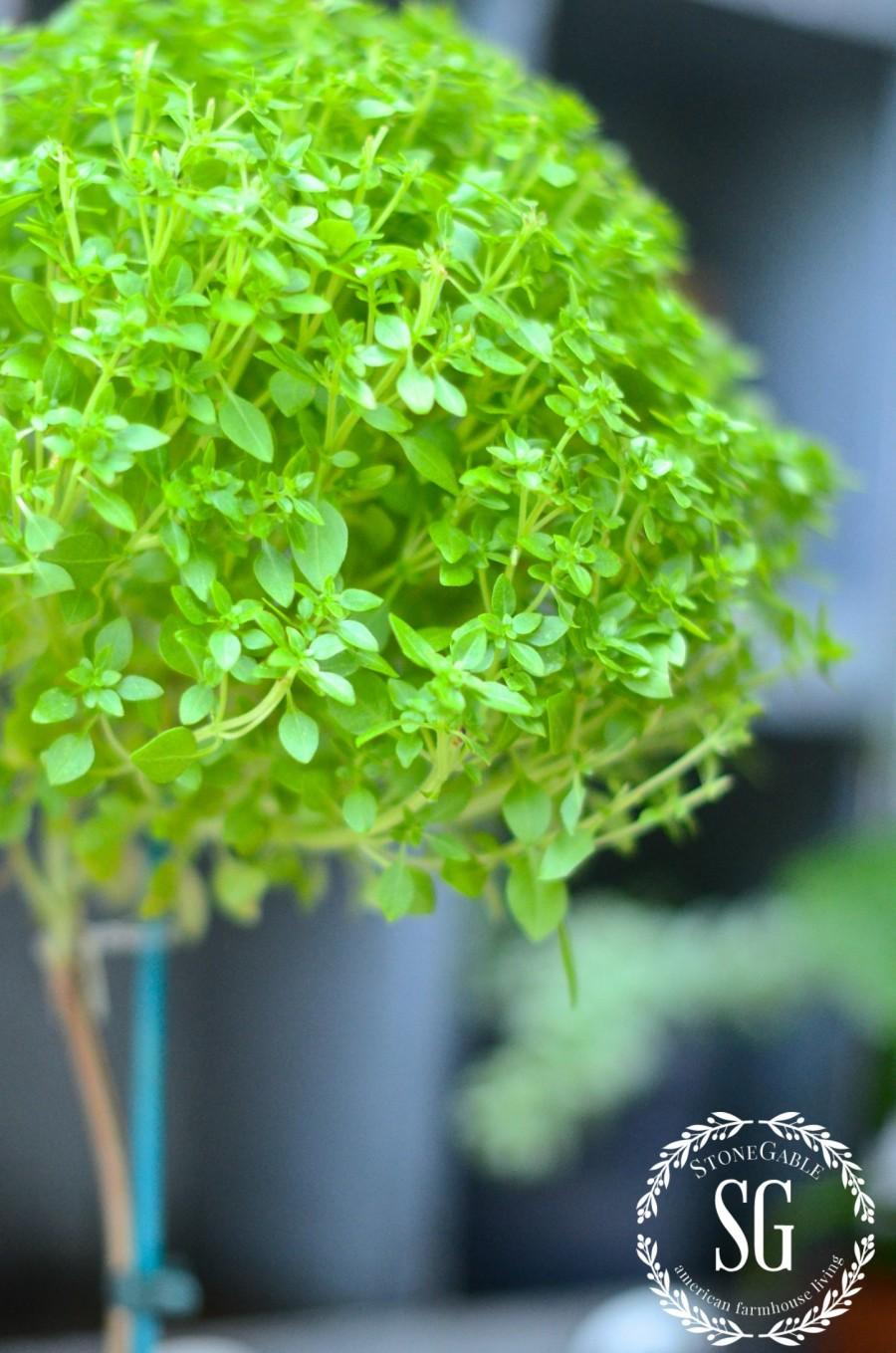 SUMMER POTTING BENCH-tiny basil leaves-stonegableblog.com