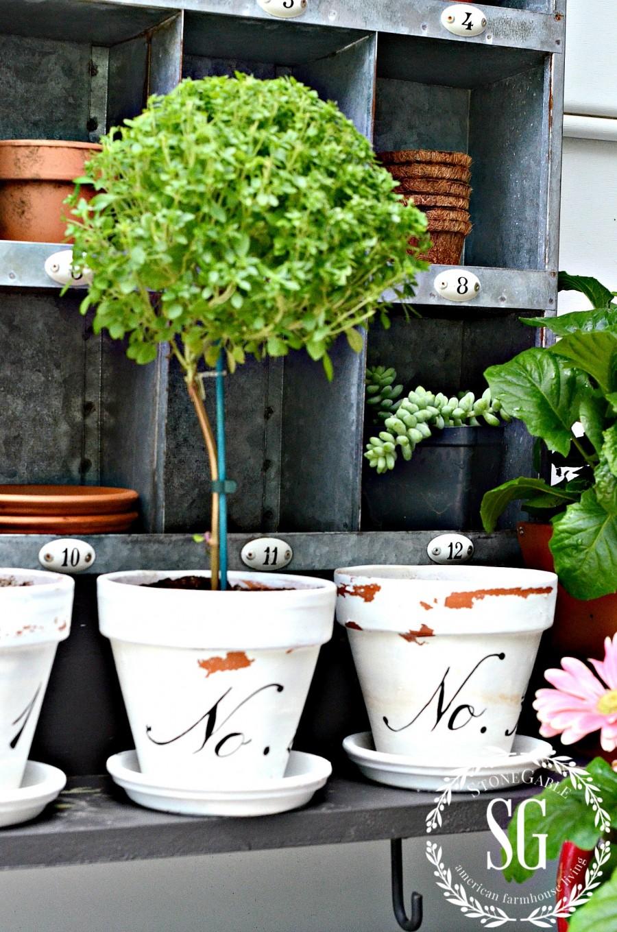 SUMMER POTTING BENCH-tiny basil tree-terracotta pot-stonegableblog.com