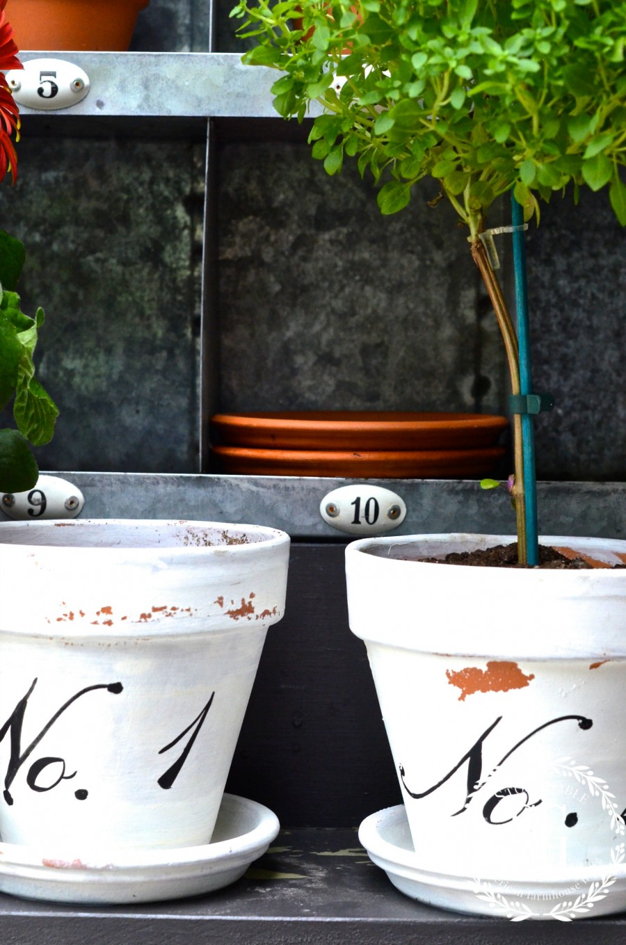 SUMMER POTTING BENCH-white chippy pots-basil tree-stonegableblog.com