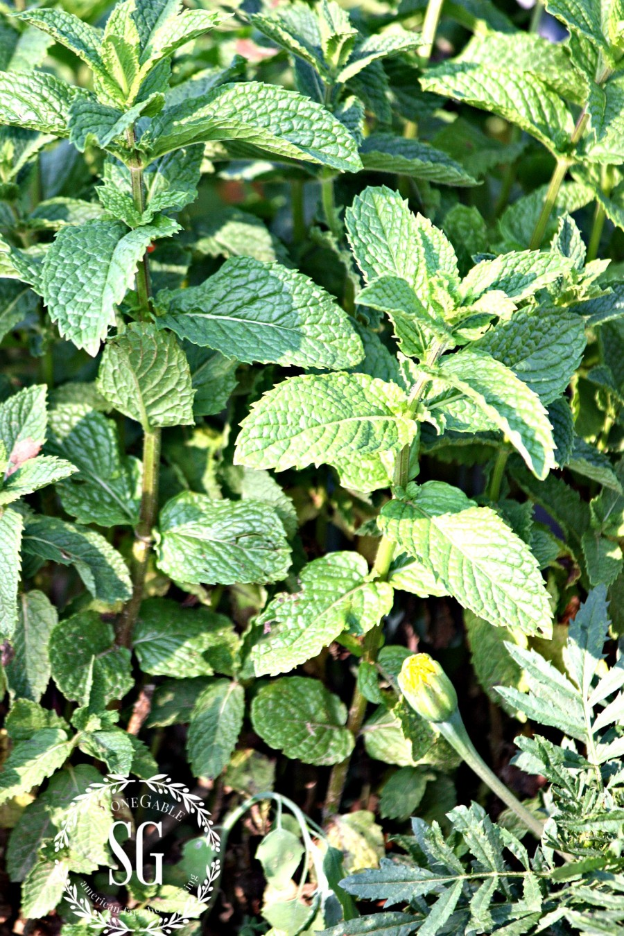5 IMPORTANT THINGS TO KNOW WHEN GARDENING-mint-stonegableblog.com