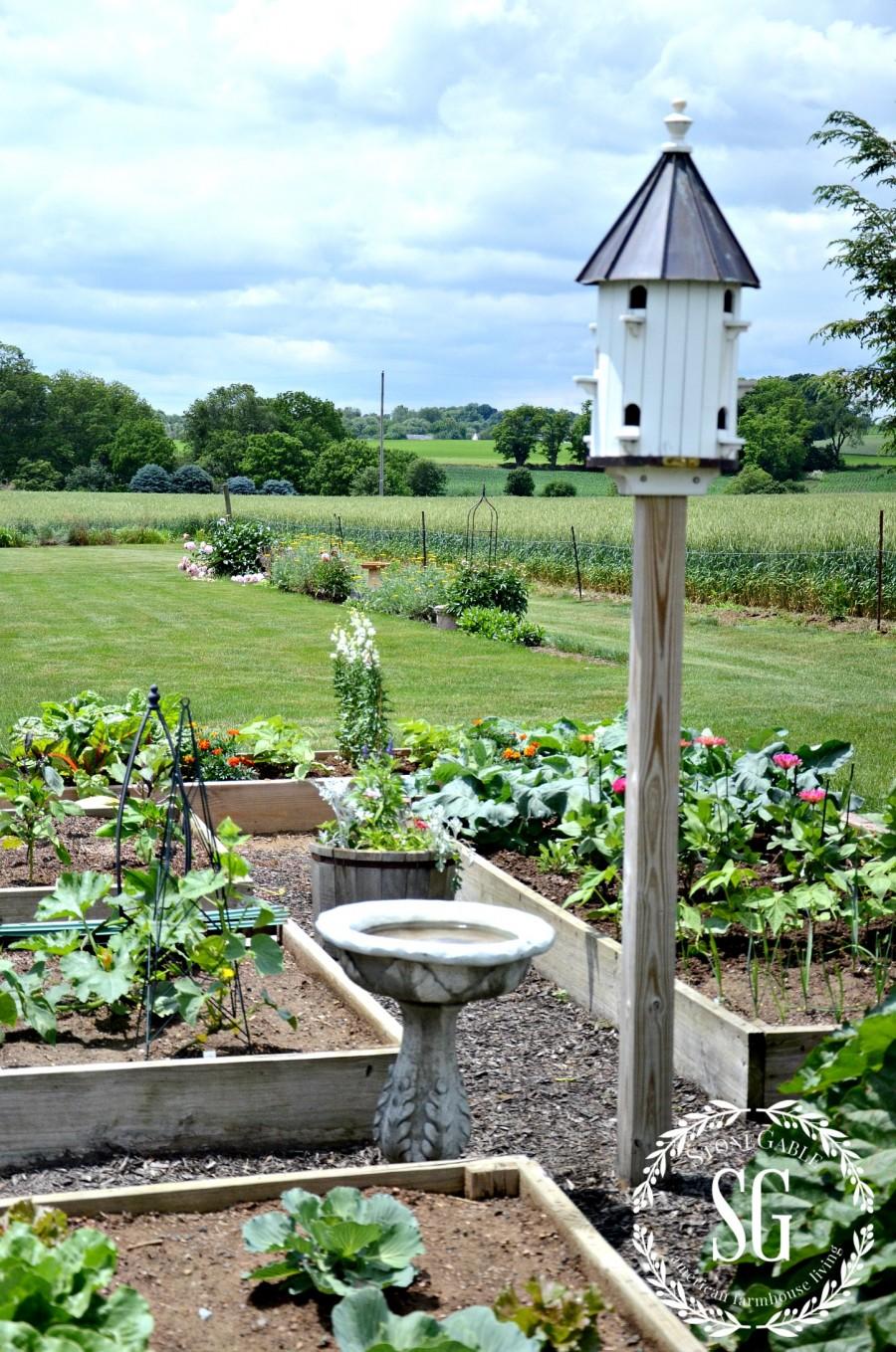 5 IMPORTANT THINGS TO KNOW WHEN GARDENING-veggie garden-stonegableblog.com