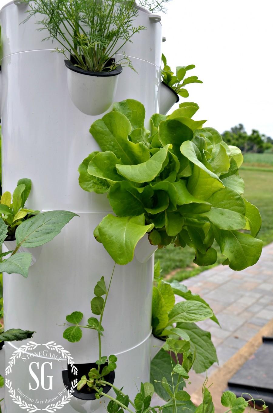 TOWER GARDEN-lettuce-stonegableblog.com
