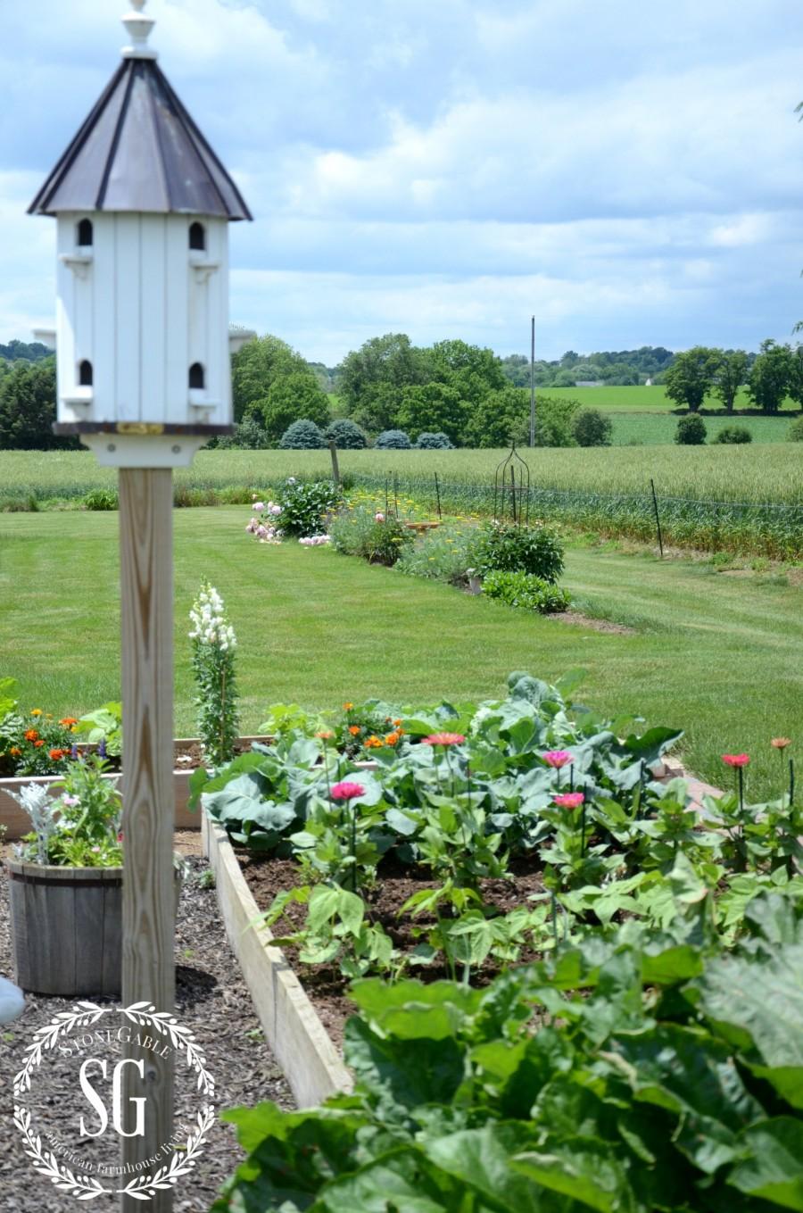 VEGETABLE GARDEN-bird house in the vegetable garden-stonegableblog.com