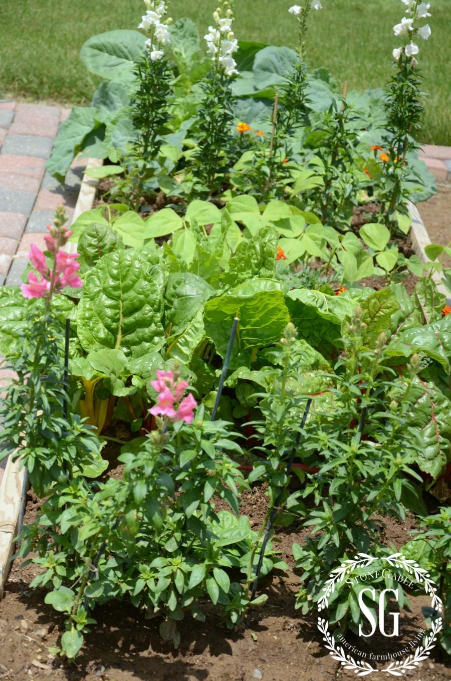 VEGETABLE GARDEN-box with veggies and a walkway-stonegableblog.com