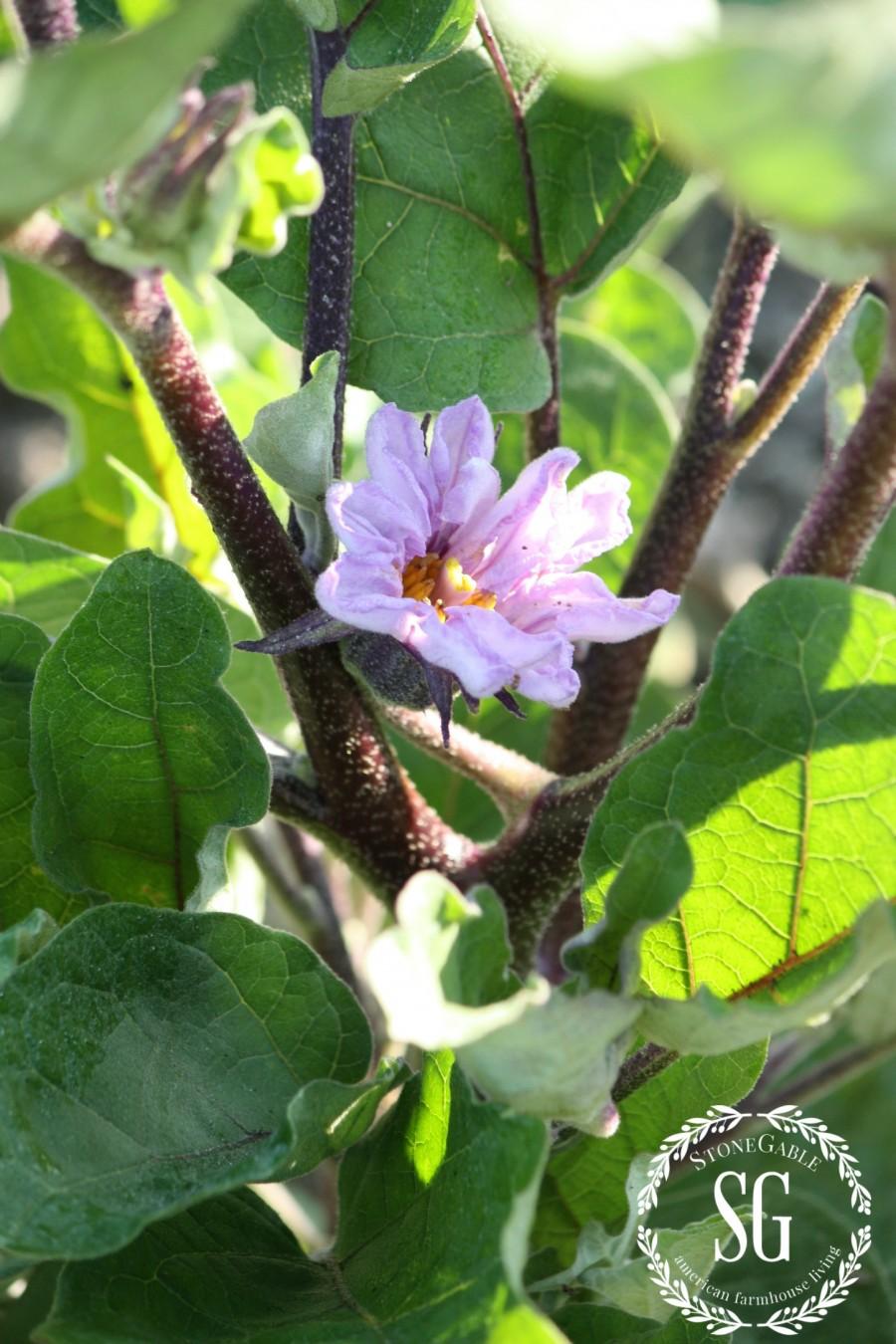 VEGETABLE GARDEN-eggplants-stonegableblog.com