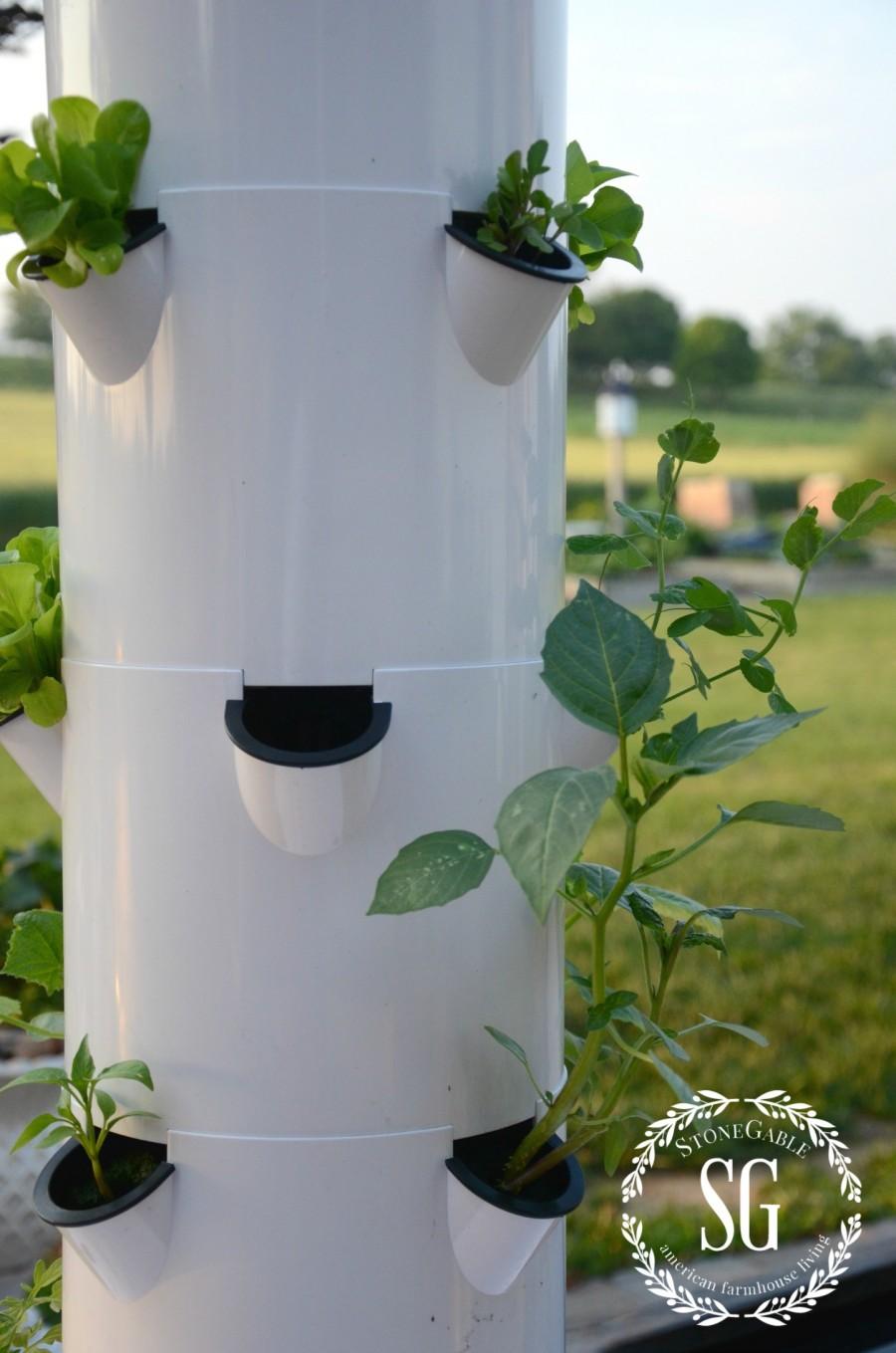 VEGETABLE GARDEN-lettuce-tower garden-stonegableblog.com
