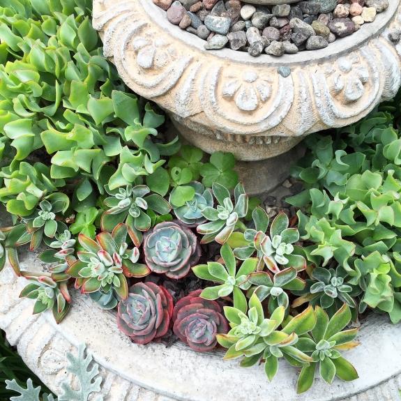 succulents-fountain-1-e1434308392554