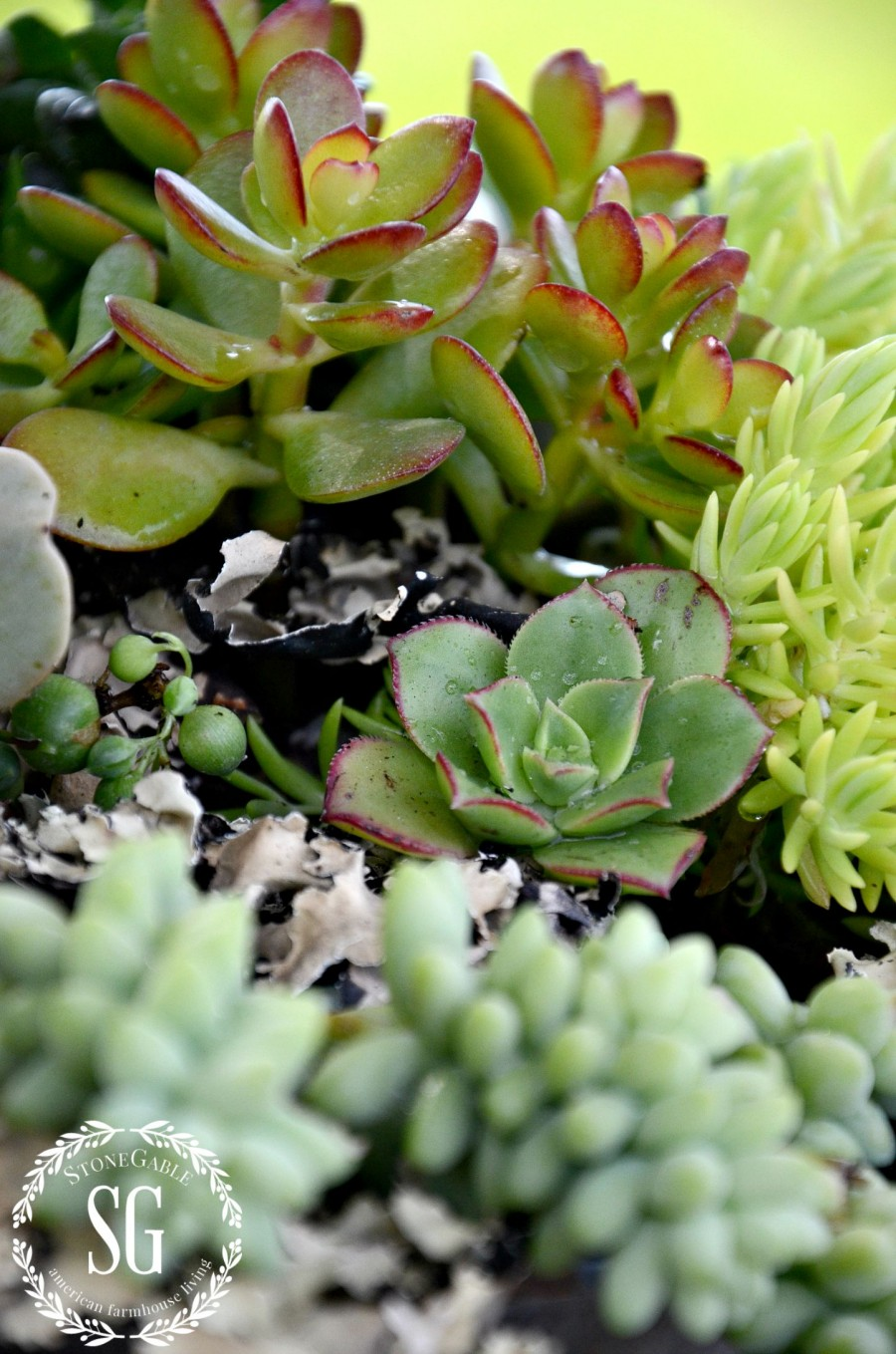 HOW TO PLANT SUCCULENTS-a variety of succulents-stonegableblog.com