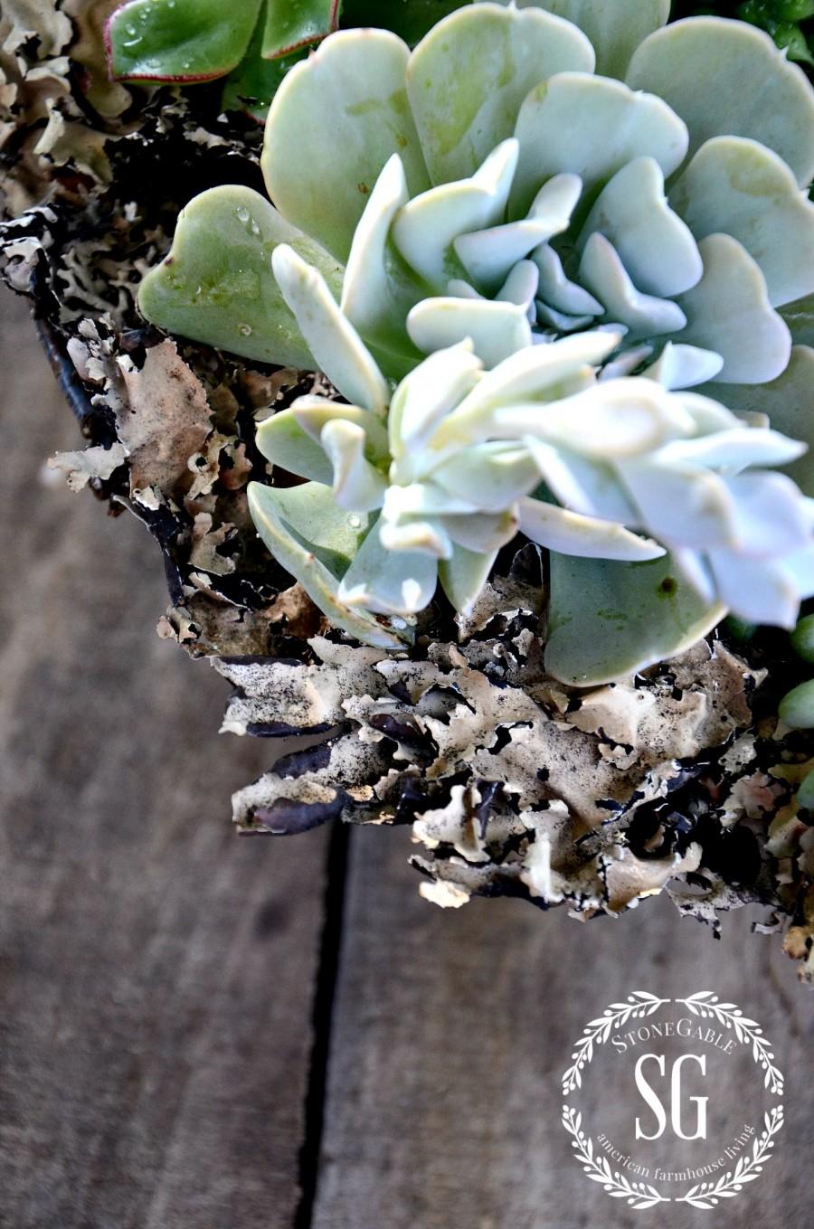 HOW TO PLANT SUCCULENTS-planting succulents-moss-stonegableblog.com
