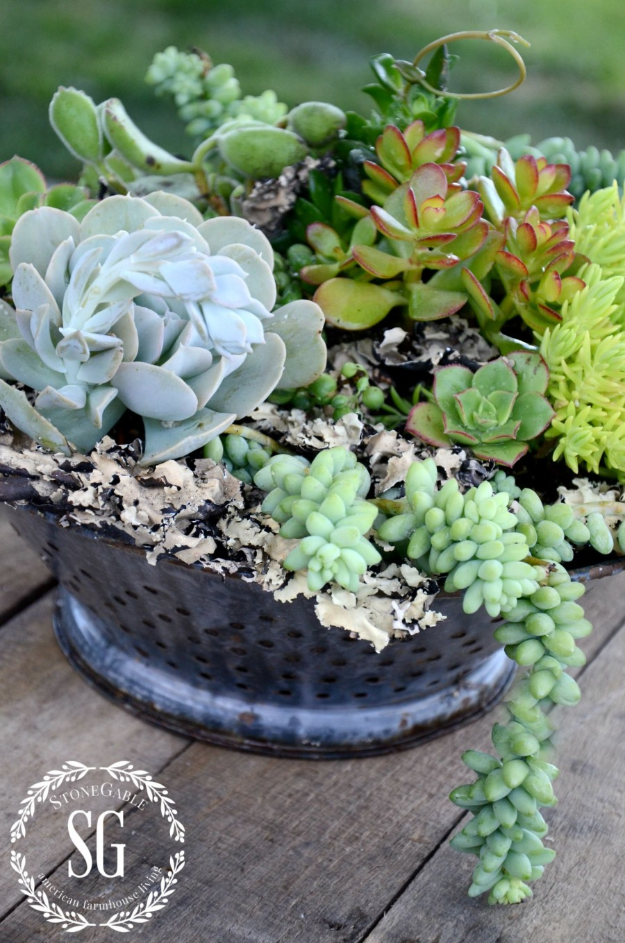 How to plant succulents beautifully Can succulents grow outside