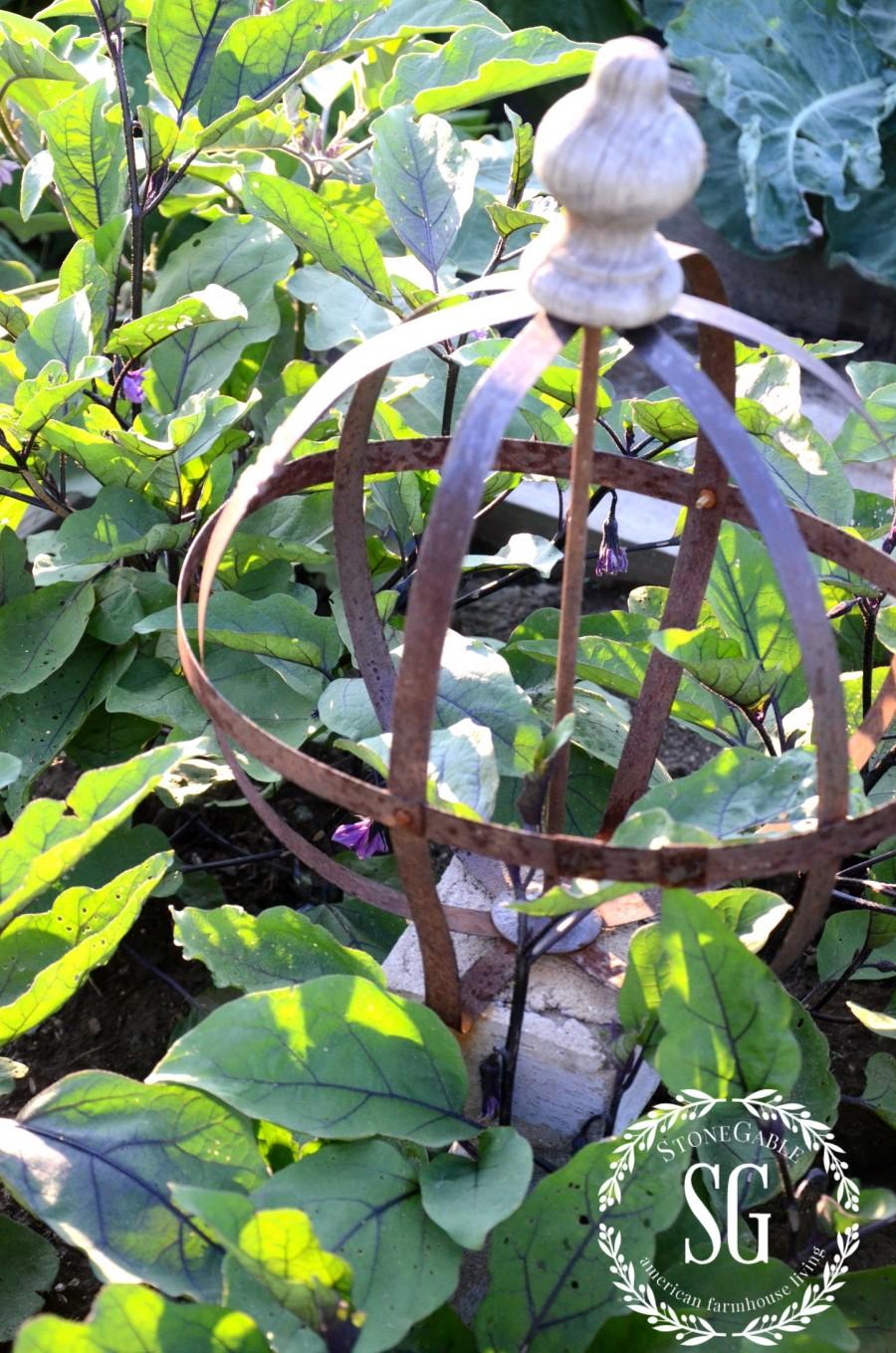 JULY IN THE VEGETABLE GARDEN-eggplant-stonegableblog.com