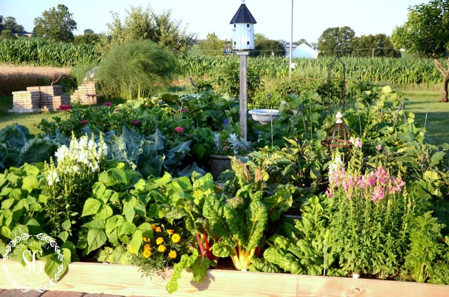 JULY IN THE VEGETABLE GARDEN-summer garden-stonegableblog.com