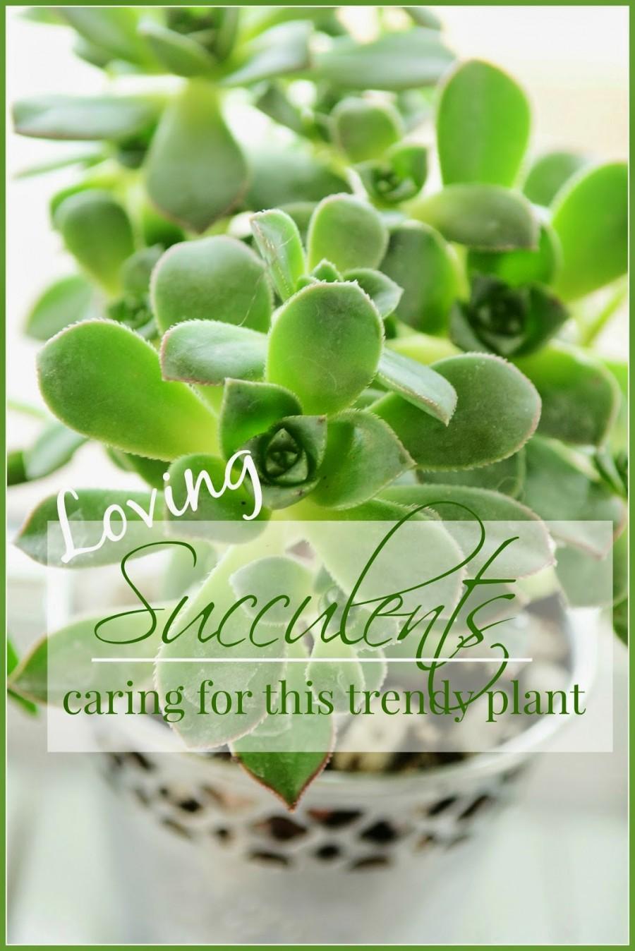 SUCCULENTS-TITLE PAGE-stonegableblog