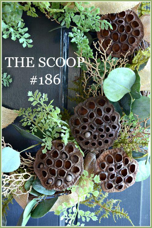 THE SCOOP #186