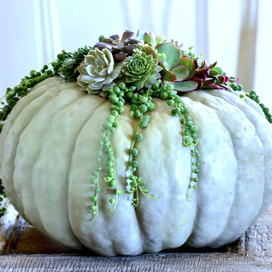 DIY succulent top pumpkins kellyelko.com