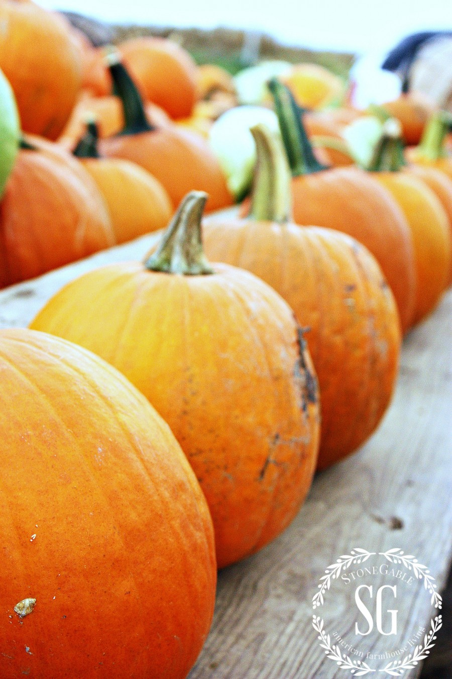 KEEPING PUMPKINS FRESH- Easy tips for keeping pumpkins looking great longer-stonegableblog.com