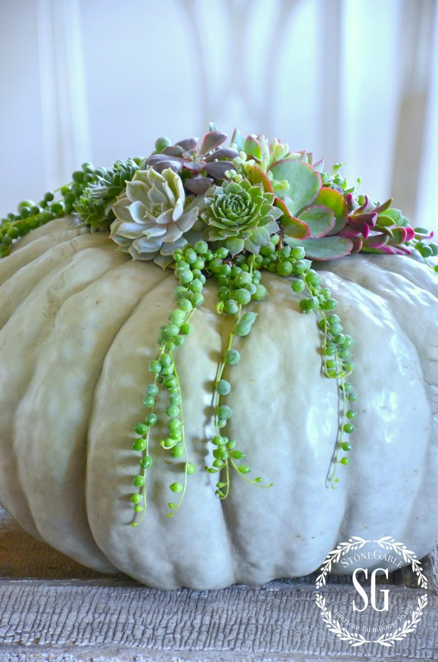 Succulent Top Pumpkins