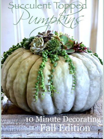 SUCCULENT TOP PUMPKINS