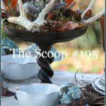 THE SCOOP #195