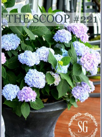 THE SCOOP - Hundreds of home and garden ideas from across the web