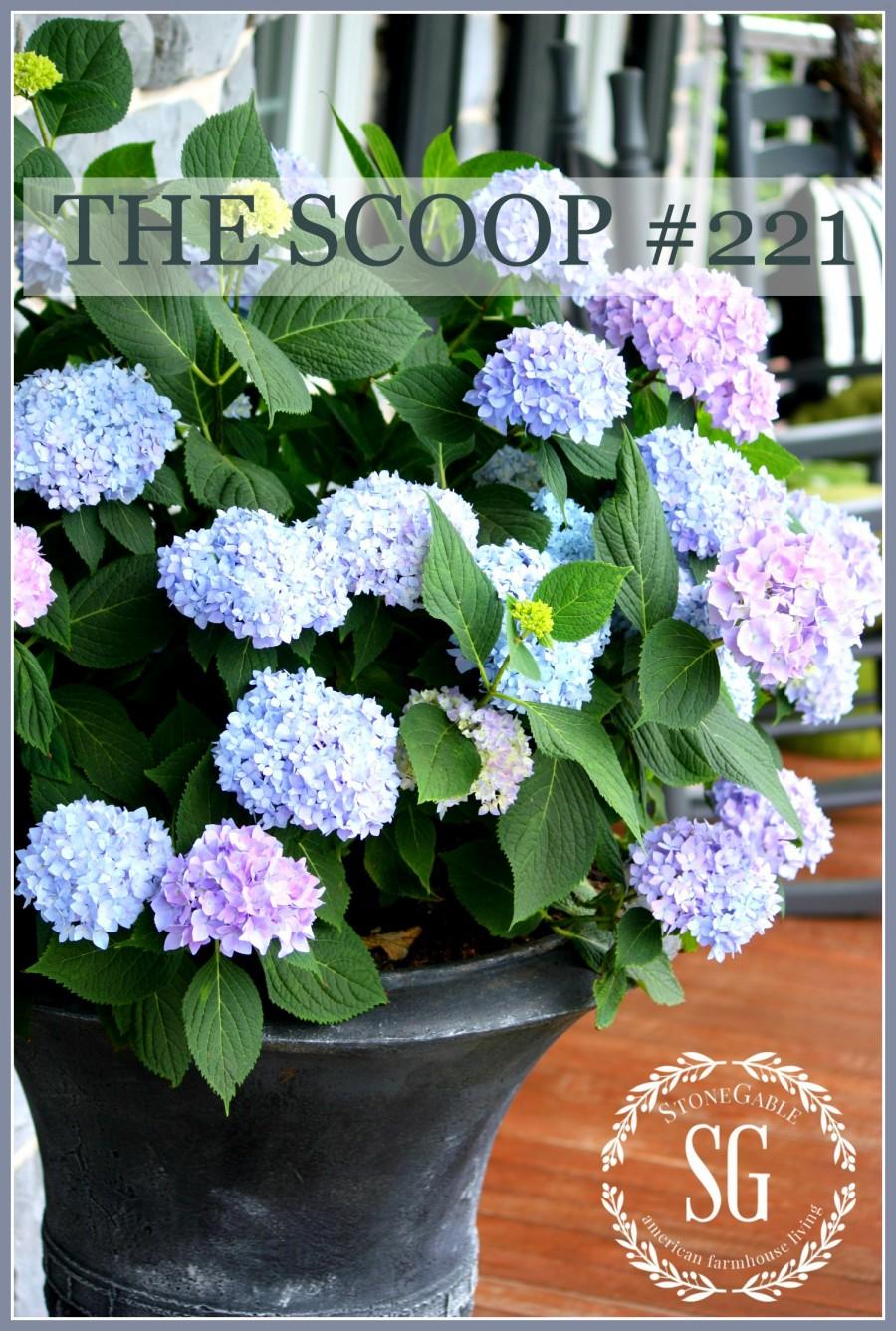 THE SCOOP #220