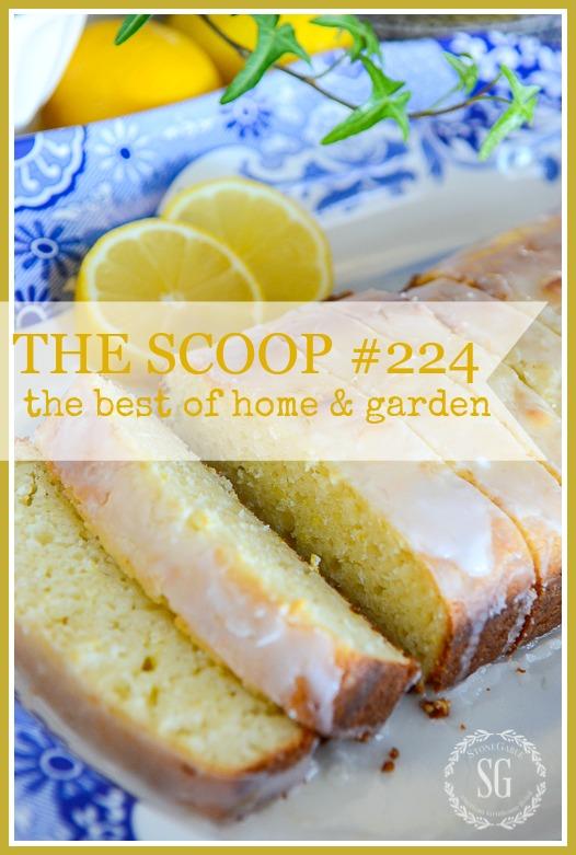 THE SCOOP #224