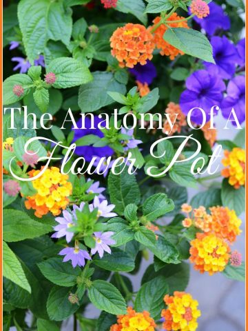 THE ANATOMY OF A FLOWER POT