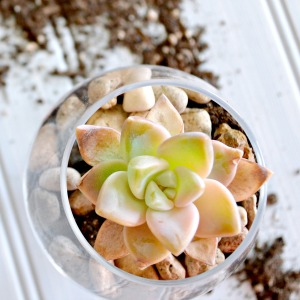 10 minute decorating idea with succulent planters!