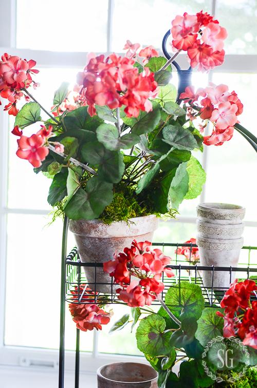 SUMMERY FAUX BLOOMS-sunlight-through-geraniums-stonegableblog-2