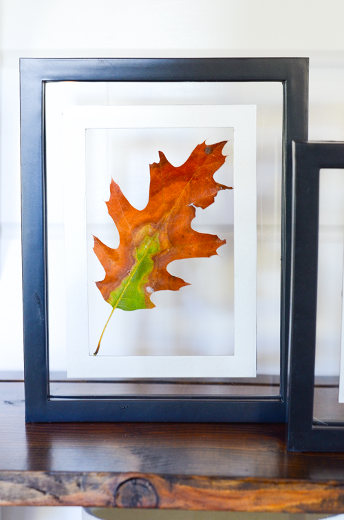 FALL LEAVES IN GLASS FRAMES- A beautiful and easy way to display fall leaves in 10 minutes