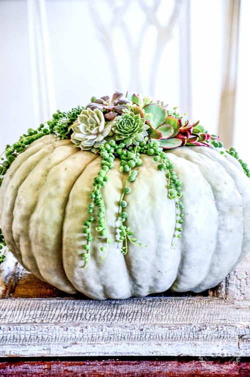 5 FABULOUS FALL DIY'S-Now's the time to make a little fall magic for your home!
