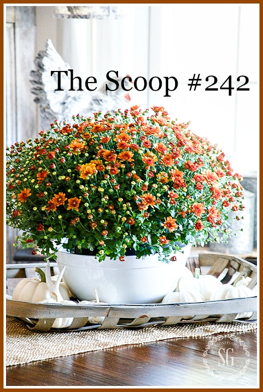 The SCOOP- the best home and garden post from around the web.