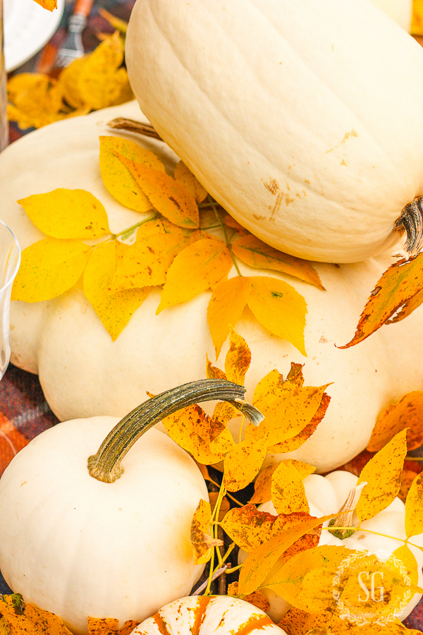 close up of white pumpkins and golden leaves
