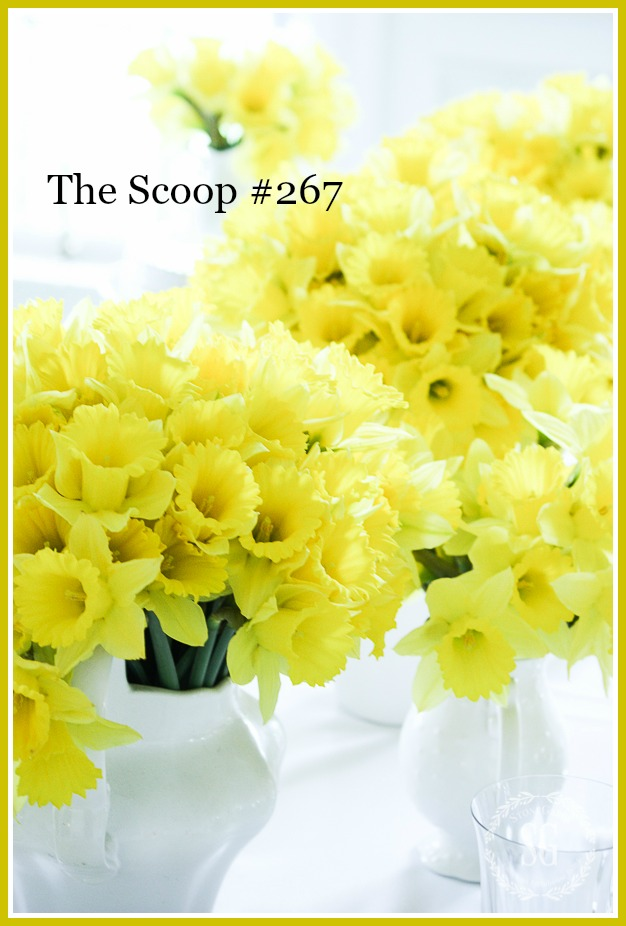 THE SCOOP - The best of home and garden blogs all in one place.